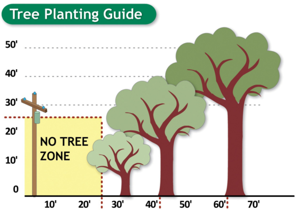 illustration of tree planting zones