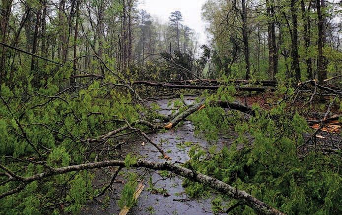 trees limbs down on roadway
